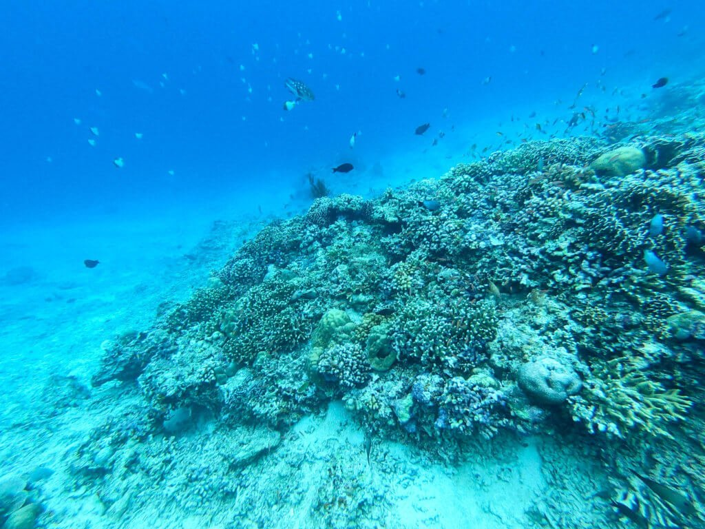 under the sea of scuba diving